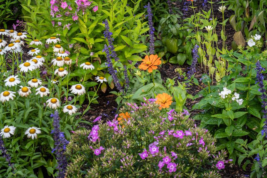 3 David Hartt A Colored Garden 55