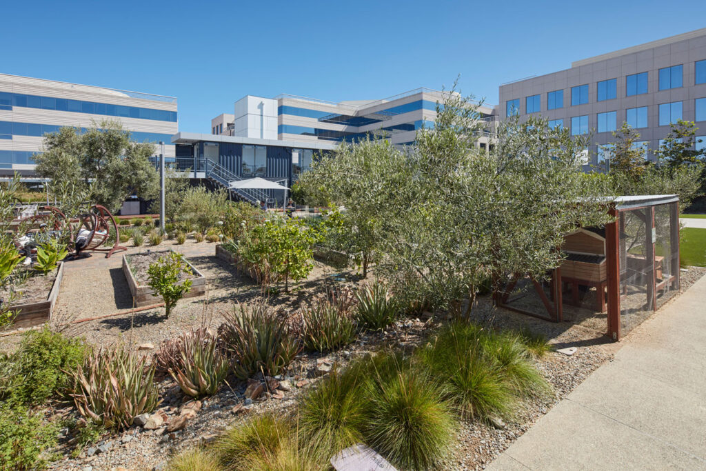 An outdoor courtyard at a workplace project
